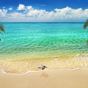 A lovely beach located on Taylor Bay, Providenciales, Turks and Caicos, Caribbean. A pelican sails between two coconut palm trees in the idyllic location.