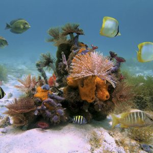 Colorful bouquet of tube worms and sea sponges with tropical fish in the Caribbean sea